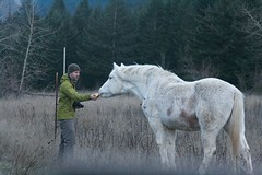 the horse and his guy (jennneal818) Tags: wild horse animal oregon friendship or gorge columbiarivergorge excellence horseandhisboy