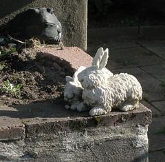 Rabbit Meets Frog (denizen8) Tags: rabbit square massachusetts frog malden gardenstatuary denizen8 img3626b