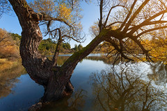 Vrmdza Lake (Radisa Zivkovic) Tags: wood old blue autumn red sky sunlight lake reflection tree fall nature water leaves yellow landscape colorful branch outdoor serbia foliage wilderness