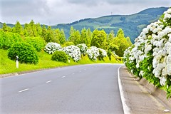 The road. (clicheforu) Tags: road travel flowers trees light sky plants nature colors clouds landscape island view atlantic archipelago azores saomiguel furnas theroad mounts acores clicheforu
