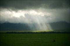 Hole in the Sky (*Kicki*) Tags: africa sky nature tanzania jackal safari ngorongoro explore ngorongorocrater lioncubs gamedrive rainseason flickrexplore thebigfive explored