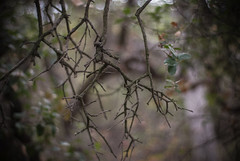 twigs (Danielle_M_Bedics) Tags: tree nature forest branches twigs descansogardens