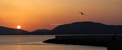 Alghero (CarloAlessioCozzolino) Tags: sardegna sunset sea sun tramonto mare sardinia panoramica sole canadair alghero panoramicview