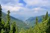 Nathiagali (Shehzaad Maroof Khan) Tags: trees pakistan mountain nature forest nikon peace valley nathiagali abbottabad kpk galayat