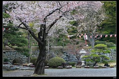 nEO_IMG_DP1U3765 (c0466art) Tags: park old trip travel flowers light green castle pool beautiful japan canon season spring scenery afternoon bloom sakura 2015 trres 1dx c0466art
