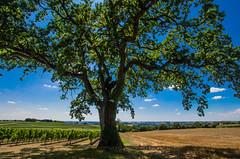 L'arbre (Fabrice Le Coq) Tags: vert bleu ciel nuages paysage extérieur arbre couleur fabricelecoq