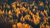 Autumn - Sufnersee - Graubünden - Schweiz (Felina Photography) Tags: trees forest autumn autunno herfst herbst colours colors colori felinafoto felinaphotography felina photographer photography fotografia fotografie fotografo fotografa tourism turismo toerisme turismus tourismus hiking hike tour trip adventure hotspot excursion escursione excursions escursioni excursie tocht uitje ausflug gita poster wallpaper switzerland suisse svizzera schweiz zwitserland alps alpi alpen mountain montagna montagne landscape landschap paysage paesaggio nature natura natuur grigioni graubünden grisons grischun