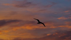 Londres - (FGuillou) Tags: sky londres london bird birdy sunset ombre shadow 伦敦