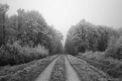 44Givrés (Pierrokaphoto) Tags: froid glace givre forêt chemin fuite couple