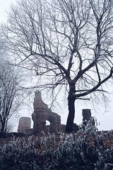 Wörschweiler Abbey (Michal Jeska) Tags: wörschweiler abbey kloster klosterruine ruine ruin homburg saar saarland canonef35mmf2 canon 35mm 20 f2 prime abandoned