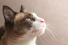 me parece que llueve eh- (Franciscomateoo) Tags: catseyes cat canon7d catworld eyes 24105l