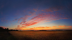Sunset (Pásztor András) Tags: sunset field village wheat clouds red yellow blue sky warm colorful summer evening calmness harmony 18mm wide angle panorama landscape nature dslr nikon d5100 hungary andras pasztor photography 2017