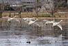 20170109-DS7_2492.jpg (d3_plus) Tags: d700 street 日常 70210mmf4 路上 望遠 景色 sky telephoto 風景 japan aiafnikkor70210mmf4s streetphoto dailyphoto nikon 鳥 70210mmf4af daily nikond700 路上写真 bird 70210mm 公園 garden 庭園 702104 scenery 70210mmf4s park ストリート 70210 thesedays 空 日本 tele ニコン nikkor