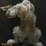 Sophia's Past Puppies !