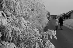 iced (Greyframe) Tags: spaziergang trails weg path way white greyframe outdoor deutschland germany monochrome grey blackwhite blackandwhite bw blwh schwarz weiss schwarzweis einfarbig walk snow winter trail schnee landschaft landscape nature bush ice iced question back backshot shot