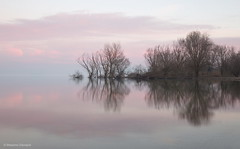 Symmetry (Massimo_Discepoli) Tags: water reflections trees clouds mirror italy trasimeno beautiful landscape