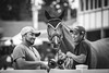 Devon 2016 (Jen MacNeill) Tags: devonhorseshow2016 devon horse show equine equestrian pennsylvania pa