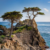 Freinds (doninmanphotography) Tags: california rockycoastline pebblebeach tree northamerica pacificocean centralcoast 17miledrive montereycypresstree unitedstates plants thelonecypress ocean lonecypress montereycypress rockyseashore us usa