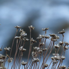IMG_5046 (jesust793) Tags: flores flowers naturaleza nature macro