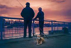 Fishing and enjoying (Master Iksi) Tags: fishing canon700d beograd belgrade srbija serbia river dog people