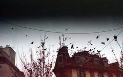 Birds (Minchioletta) Tags: pentaxmesuper smcpentaxa50mm smcpentaxa50mmf17 50mmlens agfavista400 analogicait lomographyandvintagecameras c41 birds uccelli piccioni pigeons
