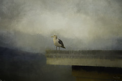 Alone does not always mean lonely... (Sara Gray Photography) Tags: moody photoart seagul seattle clouds digitalart photomanipulation topazlabs topazimpression