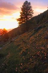 lumiere du soir (luka116) Tags: berg montagne schweiz switzerland soleil suisse swiss svizzera paysage moutain wallis couchant valais montagnes 2015 dentdumidi scexcarro