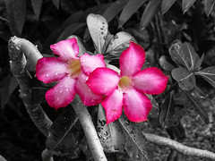 Atlanta Botanical Garden, Georgia (nadine3112) Tags: atlanta botanicalgarden colorkey colorkeying