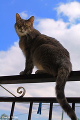 Can I fly away, mum? (PurpleTita) Tags: summer sky italy cats pets mountain nature cat canon torino freedom italia estate natura piemonte cielo turin gatto montagna piedmont gatti animali libert vallidilanzo eos1100d