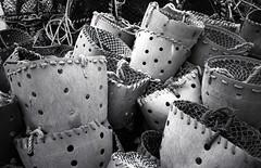 Scarborough Harbour (pho-Tony) Tags: blackandwhite bw white black macro film 35mm angle 28mm wide shell wideangle slide olympus clam ishootfilm analogue xa rodinal zuiko xa4 clamshell olympusxa4 filmisnotdead autaut rolleiretro400s filmrolleirpx400
