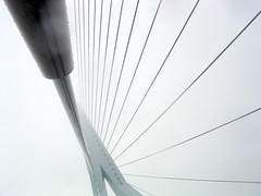 Erasmusbrug (pedro smithson) Tags: travel bridge sky netherlands lines fog nikon lookup diagonal cables coolpix 3100 pedrosmithson