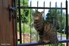 Trying to be a statue (PurpleTita) Tags: trees summer italy cats pets mountain nature alberi cat canon torino italia estate natura piemonte turin gatto piedmont gatti animali vallidilanzo eos1100d