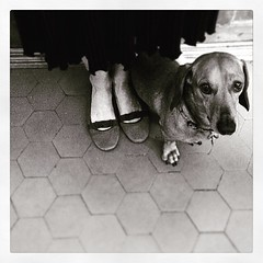 Fedeltà (Maieutica) Tags: dog love cane shoes legs sweet near mommy dolce mamma sweetness amore scarpe gambe vicino ballerine bassotto tenero attaccato