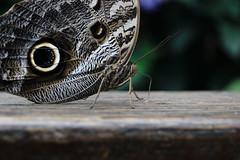 Borboleta (acataide) Tags: butterfly macro