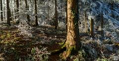 hansel and gretel (gregor H) Tags: feldkirch vorarlberg liechtenstein at fairytale winter forest wood hoar