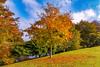 Autumn Colours 2 (Anthony White) Tags: westdorsetdistrict england unitedkingdom gb leaves autumn autumn2016 autumncolors nature natur westdorset paisajes weather colourful sunlight sky bluesky clouds