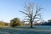 Dead Tree Ickworth Park (johnboy!) Tags: ickworthpark ickworthhouse ickworth deadtrees nationaltrust