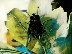 The Electric Fly (Steve Taylor (Photography)) Tags: pcb printedcircuit fly leaf veins insect art digital black blue green brown white yellow uk gb england greatbritain unitedkingdom margate foliage texture electric