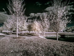 Infrared park (lolamorena) Tags: park infrared infrs infra ir trees creative fantasy recreation sunny winter day microfourthirds lumix lumixgf3 mirrorless