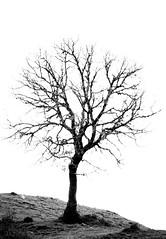 Vic (zampination) Tags: bw blackandwhite art minimalism fine a5100 sony pentacon 200mm f4 silhouette