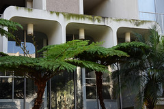 (Casey Lombardo) Tags: longbeach longbeachca apartments buildings architecture moss mossy ferns fern urban streetphotography