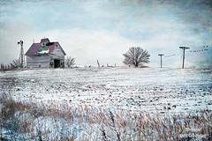The Winter Blues (RaeofGold) Tags: farm illinois abandon texture distressedtextures birdsonawire plains winter blues snow landscape desolate cold freezing raeofgold peeblespair