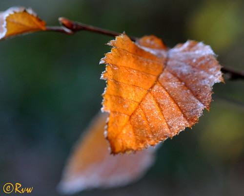 Sunshine through the leaf