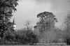 """La tourelle et les arbres d'hiver (Brigitte .. . """"Tatie Clic"""") Tags: 2016011117 janvier hiver paysage arbres tour monochrome noiretblanc nb lotetgaronne aquitaine francesudouest"""