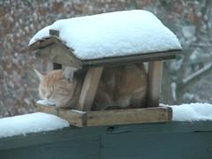 protéger le chat du froid