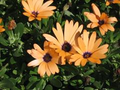 (Dan²) Tags: flowers petal stamen bloom sepal carpels tepal