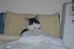 DSC_5738 (judey) Tags: cats kitten twinkle