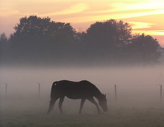 haze with horse (e) Tags: horse mist wow haze nevel weide albaluminis creativecommons buren paard specnature wonderfultheysaid