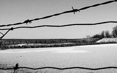 Barbed Wire Winter (Tyler Stone) Tags: winter cambridge blackandwhite bw white ontario canada black texture abandoned water topc25 thanks composition digital rural wow landscape photography frozen photo interestingness cool nice interesting fantastic perfect seasons image topc50 great fences dramatic wideangle loveit textures forgotten wires stunning barbedwire land greatshot forms isolation 500views capture tones relationships vectors brilliant tone impressive 600views fascinating 1on1 continuum aesthetics welldone 5fav 555v5f tonalrange wellframed kakadoo greashot photolicious tylerstone 20commentsanup
