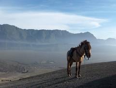 Mount Bromo - Java, Indonesia (trent_maynard) Tags: horse indonesia volcano java asia southeast surabaya bromo mountbromo